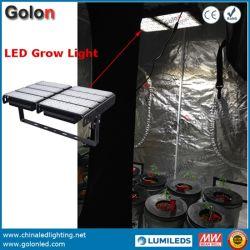 La pianta reale di potere 300W 200W 500W 400W LED coltiva l'indicatore luminoso