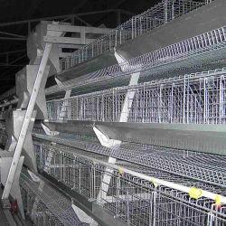 놓는 암탉 가금을%s 모형 층 감금소 계란 닭 감금소는 감금한다