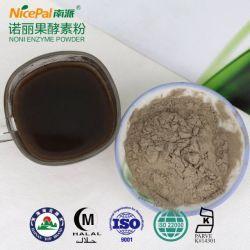 La Fruta Noni alimentación directamente de fábrica de polvo de la enzima con muestras gratis