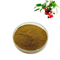 100% Natural hierba agridulce de hierbas chinas Solanum Lyratum Thunb extracto en polvo