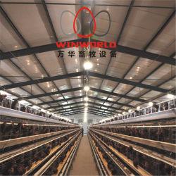 Gabbie di uccello automatiche del pollo di strato della strumentazione del pollame della Cina