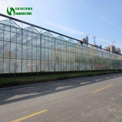Vidrio de Venlo comerciales abarcan varios gases de efecto de la casa de flores