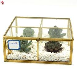 Plantadeira retangular pequeno ar caixa de plantas suculentas House de mudas de vidro com tampa