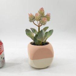 Evergreen décoration de jardin de fleurs succulentes artificielle Bonsai