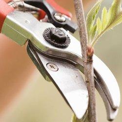 2019 lame droite en acier inoxydable de promotion de cisaillement de jardin