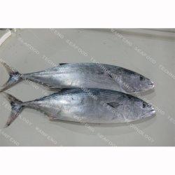Замороженных морепродуктов всего раунда полосатый Bonito