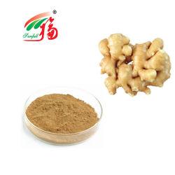 Le gingembre Extrait Extrait de racine de gingembre pour Gingerols Immune-Boosting et antivirus