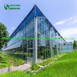 Venlo cristal inteligente de efecto invernadero Agrícola Comercial Tienda crecer