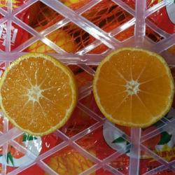 Mandarin van de Baby van de goede Kwaliteit Zoete