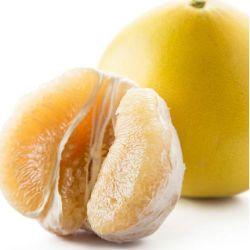 Pomelo fresco del nuovo raccolto per esportare