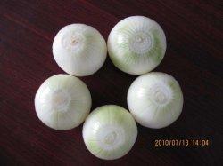Dispensador de cebolla de alta calidad (AZ-02)