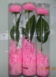 Carnation цветок