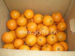 Gute Qualitätsfrische süsse Navel-Orange