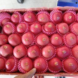 FUJI fraîches Apple nouvelle récolte