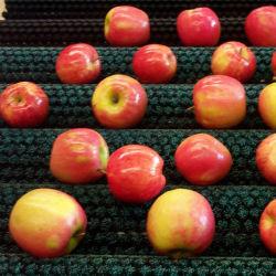 Escova de Limpeza do cilindro cilindro Industrial frutas vegetais Escova Rotativa