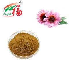Echinacea purpurea Extract 0.3 ~ 0,4 % acide chicorée