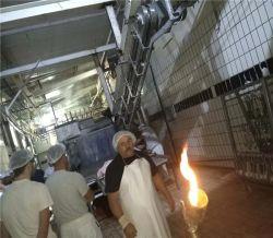 El sacrificio de cerdos de descarga neumática de la máquina para el dispositivo de alimentación Matadero