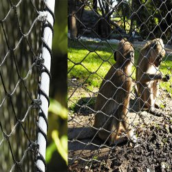 Трос из нержавеющей стали 304/316 сетка животных зоопарка у поставщика корпуса