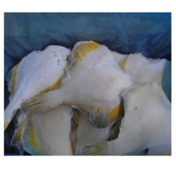 Замороженные желтоперого тунца, выкл., Gutted головки блока цилиндров