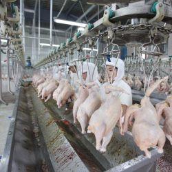 Strumentazione dell'impianto di lavorazione della carne dell'anatra del pollo di Halal/linea di trasformazione del pollo