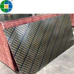 포플라르 코어 E2 포름알데히드 건설은 구조용으로 필름 표면 합판을 사용합니다