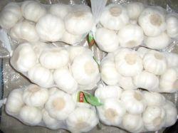 2013新しい穀物の新しく純粋で白いニンニク