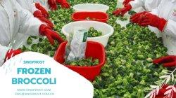IQF Broccoli, IQF Bloemkolen, IQF Edamame, IQF Mukimame, de Uien van de Lente IQF, IQF Okra, IQF Slaboon, de Kastanjes van het Water IQF, IQF Gedobbelde Uien, ISO/HACCP/Brc/Kosher/Halal