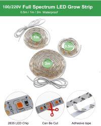 LEDは軽く完全なスペクトルを育てる遠い赤LEDがライトを育てるプラント730nmのための軽いストリップ2835チップLED Phytoランプを育てる