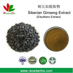 Estratto di Eleutheroside B+e 1.0% estratto di Eleuthero estratto di polvere di Ginseng Siberiano