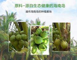 Secar o leite de coco em pó provenientes da China