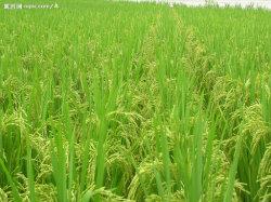 有機性農業のほう素のアミノ酸のキレート化合物