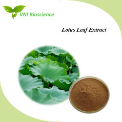 ISO Certified Manufacturer Supply Lotus Leaf Plant Extract für Lose Weight