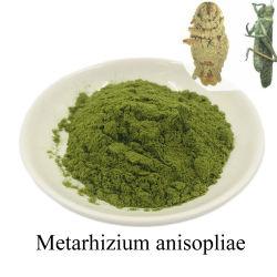 Organische chemicaliën Pest Control Metarhizium Anisopliae producten