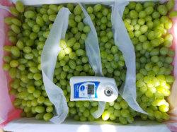 Nouvelle saison de raisin rouge/vert Global