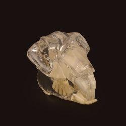 Animal Conejo Dental dentición dientes, dientes de conejo modelo transparente modelo