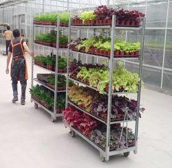 Uso esclusivo del fiore della mano del carrello del compensato del supermercato danese della mensola