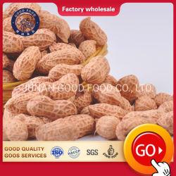 Qualitäts-Erdnuss und Erdnuss ohne Shell-Erdnuss