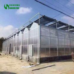 L'agriculture/Commerical Multi Span Feuille Feuille de polycarbonate/PC /Châssis en acier de serre agricole pour les légumes/jardin/tomate/l'Aubergine/Laitue/Fruites