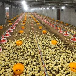 Mamelon de système d'alimentation et de boire de l'équipement de ferme de poulets de chair de volaille automatique