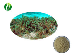 Le varech Extrait Extrait d'Algues Wakame Sargassum laminarine Fucoidin 5%-98%