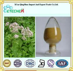 Qualidade superior Valerian Root Extraia/Valeriana officinalis Extract