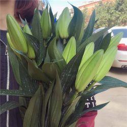 Высокое качество горячей продаж свежих вырезать цветы белой лилии для проведения свадеб, подарков и украшения