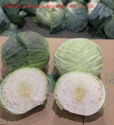 Зеленый свежий/белый/красный/пекинской капусты