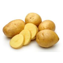 La nouvelle récolte de pommes de terre fraîches de Hollande