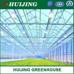 Multi-Span/PC/Hoja de efecto invernadero hidropónico para cultivos hidropónicos/Verduras/Flores/semilla de cría o el tomate y pepino/Plantación de fresas para la venta