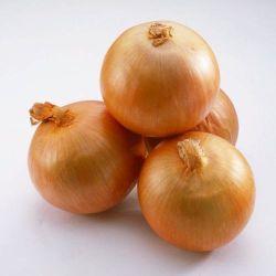 Schöne Brown-runde Zwiebel