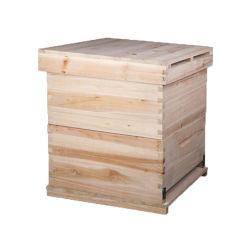 Multa de madeira polida Bee Hive caixa para a apicultura