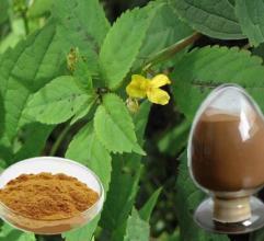 ヘルスケアのためのイラクサによって乾燥される葉のエキス7%のケイ素