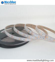 5050 SMD RGBW LED Strip/LED Streifen-Licht/flexiblen LED-Streifen imprägniern