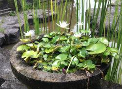 Vaso di /Stone della piantatrice della pietra del giardino del granito/POT di fiore
